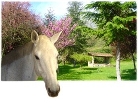 agriturismo - equitazione - cani